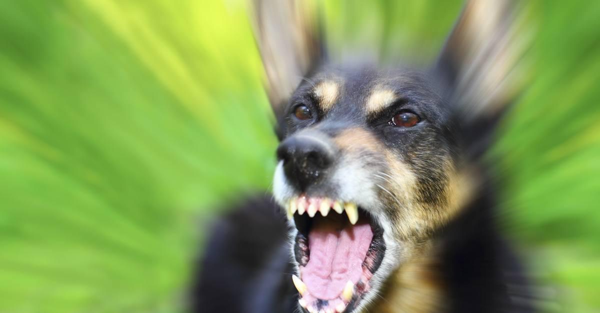 Demandas por mordeduras de perro