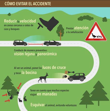 Cómo evitar el accidente